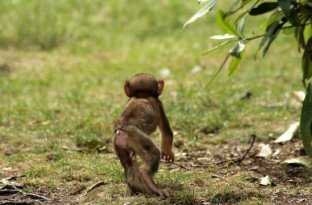 baby at Monkey Forest